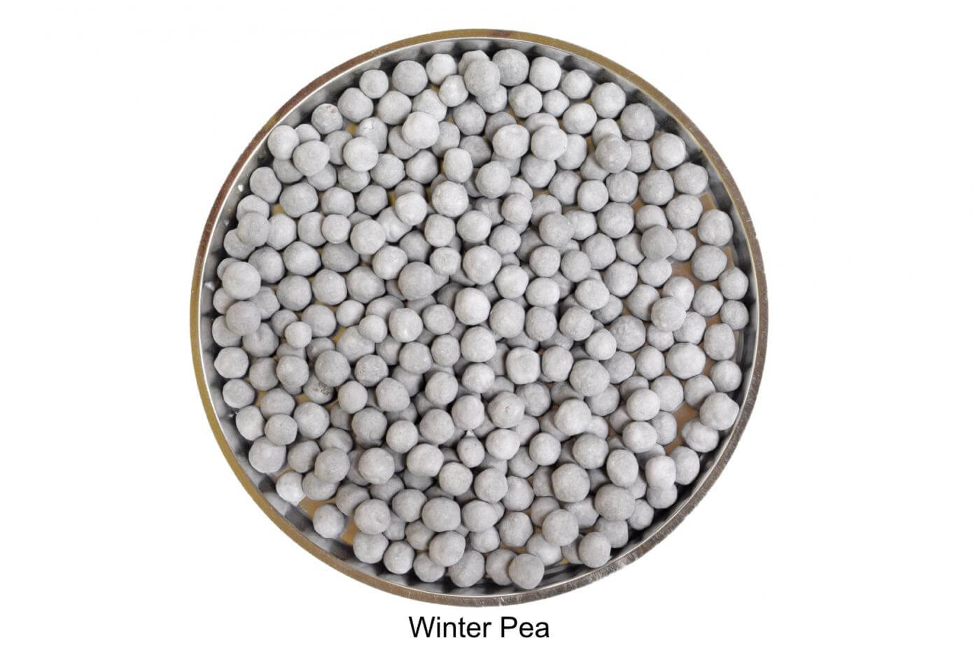 Coated winter pea seeds